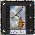 dia_Winter